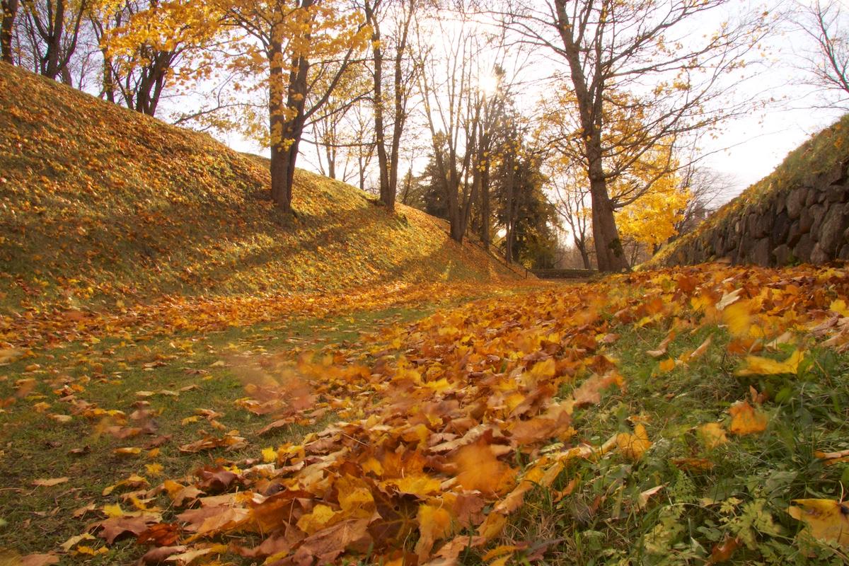 Tuuli puhaltaa keltaisia vaahteranlehtiä linnoituksen ruohoisten vallien välissä.
